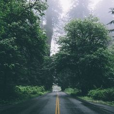 Ideas For Vintage Nature Photography Landscape Hiking Beautiful Roads, Beautiful Places, Camping Photography, Nature Photography, Mountain Photography, Photography Poses, Landscaping Trees, Landscaping Design, Forest Road