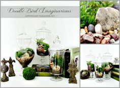 This stunning set of 3 complimentary rustic/woodland planted apothecary vase terrariums feature an easy to care for garden of fern moss and other attractive natural elements. Perfect for wedding table centerpieces or to accent your home decor! Fresh harvested moss, polished river stones, and faux fern fronds are all placed aesthetically in a multi-layer process. Moss is an easy houseplant requiring only occasional watering (see below). The tall apothecary jar measures 16 high, the medium is…