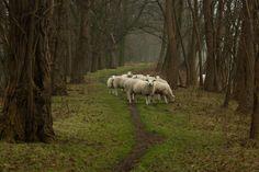 amersfoort, the netherlands.