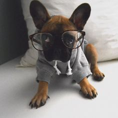 """""""Are you SURE the other puppies won't laugh at me?"""", French Bulldog Puppy gets new glasses."""