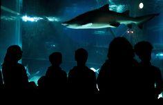 Shark Exhibit at the Greater Cleveland Aquarium