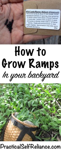How to Grow Ramps in Your Backyard ~ Grow your own wild leeks