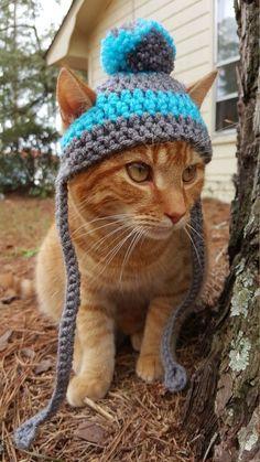 Winter Cat, Crochet Animals, Crochet Hats For Cats, Cat Crochet, Crochet Birds, Crochet Food, Pet Clothes, Cat Clothing, Knitting Accessories