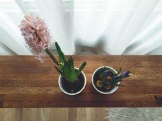 Hiacynt i szafirki // hyacinth and muscaris, flowers. bench: http://www.designhouse.pl