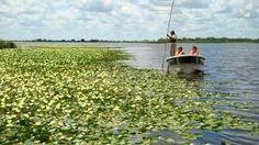 Wetlands of the Esteros del Ibera