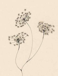 flower 3 by lindzb on DeviantArt