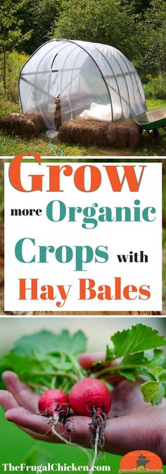 Want to grow more organic vegetables in your garden? Try gardening with hay bales!