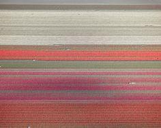 Tulips 10, Noordoostpolder, Netherlands, 2016 by David Burdeny