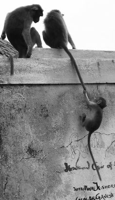 Share from UPLO: Monkey Tail 100cameras #004india 2012 Stoll by Gigi Stoll
