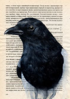 Magpie. Amazing watercolors on an old book page.