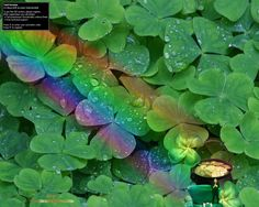 rainbows - Bing Images