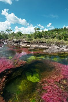 Dying to visit Cano Cristales, Colombia. Can you believe somewhere like this exists?!!!