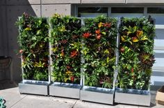 DIY Vertical Garden Design Ideas For Your Home Plants On Walls Vertical Garden Systems Gardens Flowers What An for ucwords] Vertical Garden Systems, Vertical Garden Plants, Vertical Garden Design, Vertical Planter, Vertical Gardens, Tower Garden, Garden Park, Herb Garden, Vegetable Garden