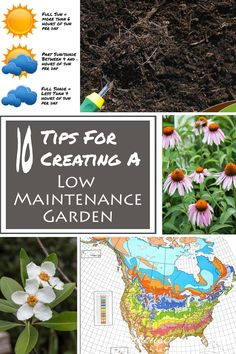 Flowers Tips And Tricks 10 Tips For Creating A Low Maintenance Garden Gardening @ From House To Home 10 Tips For Creating A Low Maintenance Garden Gardening @ From House To Home Backyard Garden Design, Diy Garden, Shade Garden, Garden Projects, Backyard Landscaping, Garden Ideas, Landscaping Ideas, Yard Design, Garden Gate