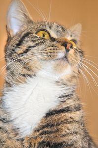 Homemade Natural Flea Killer for Cats