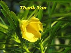 Little Yellow Saying Thankyou. Thank You Wishes, Thank You Flowers, Thankful, Yellow, Rose, Plants, Pink, Plant, Roses