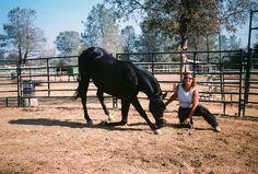 Black Horse | black horse wallpaper | Horsewallpapers.in
