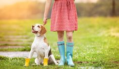 Top 4 dog walking problems - How to solve?  #dog #dogs #petcare #pet