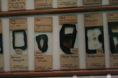 Darwin's barnacle slides | Flickr - Photo Sharing!