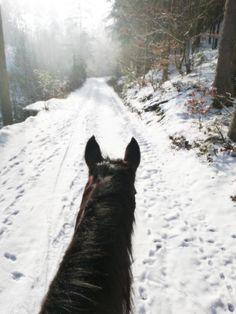 As Seen Through Horses Ears - unterwegs im Winter im Mühlviertel mit meinem Pony