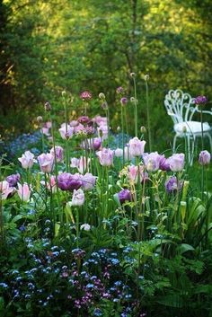 Dreamy quality - beautiful shades of purple and green in secret space in the garden...