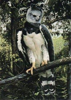 Super Bird Of Prey Raptors Harpy Eagle 38 Ideas Pretty Birds, Beautiful Birds, Animals Beautiful, Rare Animals, Animals And Pets, Bird Pictures, Animal Pictures, Eagles, Weird Birds