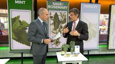 Herbal medicine goes mainstream: Breaking it down with Dr. Oz.. Many hospitals in the US are useing Young Living Essential Oils!