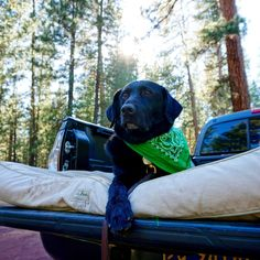 "With an L.L.Bean Dog Bed, Fred is less of a ""backseat driver"" and more of a ""backseat relaxer."" (Instagram: nathansearles)"