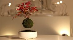 The Hoshinchu Team Read more at: http://www.beautifullife.info/industrial-design/air-bonsai-floating-bonsai-trees/ Air Bonsai - Floating Bonsai Trees