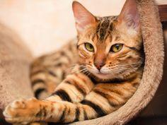 Obtuve:Gato! {Test} ¿Qué Animal serás en tu próxima vida?