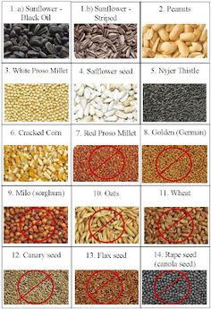 Can wild birds eat chia or flax seed? - Can wild birds eat chia or flax seed?