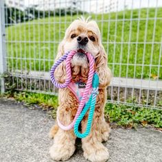 Singapore | Dog Harness | Personalized Dog Bandana | Custom Bowtie Cat Bow Tie, Bandana Bib, Pet Tags, Dog Harness, Dog Accessories, Singapore, Dog Cat, Pets, Animals And Pets