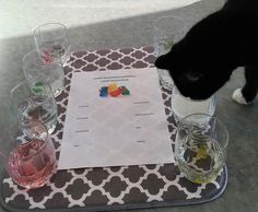 Check out our FUN Gummy Bear Osmosis experiment! BTW - this is a simple and fun experiment for children 12 and under (and their moms). Cool Science Fair Projects, Science Experiments For Preschoolers, Science Crafts, Science For Kids, Kid Projects, Gummy Bear Science Project, Gummy Bear Experiment, Gummy Bear Osmosis, Teacher Classroom Decorations