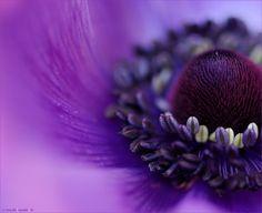 Pretty purple flower