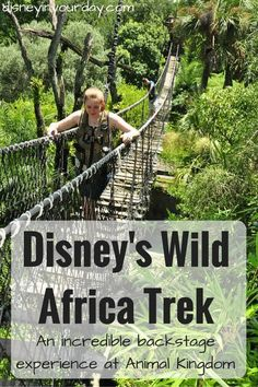 Disney's Wild Africa Trek - one of the best experiences I've ever had, not only at Disney World but anywhere. A private tour available at Disney's Animal Kingdom, Wild Africa Trek gets you up close and personal with the animals and is worth every penny!
