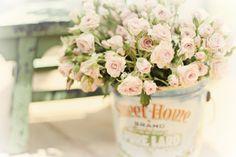 https://flic.kr/p/a2yzhu   Sweet little roses