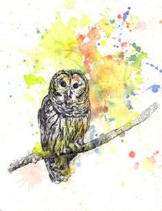 Owl Perched on a Branch Animal Watercolor Painting  by idillard