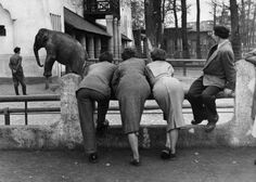 Komische Fotografie: Zoobesucher in freier Wildbahn - SPIEGEL ONLINE - Nachrichten - einestages