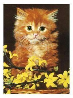 Fine Art Print-Orange Kitten with Fine Art Print on Paper made in the UK Kittens Cutest, Cats And Kittens, Cute Cats, Kitty Cats, Orange Kittens, Kitten Care, Fine Art Prints, Canvas Prints, Cat Breeds