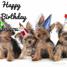 Happy Birthday Theme Yorkshire Terrier Puppies on White Singing . Happy Birthday Emoji, Happy Birthday Animals, Happy 12th Birthday, Happy Birthday Wallpaper, Happy Birthday Pictures, Singing Happy Birthday, Happy Birthday Quotes, Happy Birthday Greetings, Animal Birthday