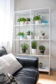 Small space herb garden