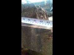 Planchas de parota o huanacaxtle