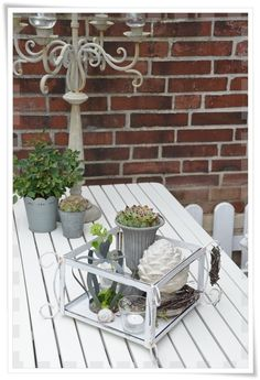 lovely outdoor table with suculants;  lovefrenchbulldogs.tumblr.com