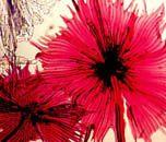 http://www.microscopyu.com/smallworld/gallery/contests/1982/index.html