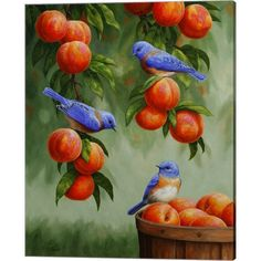 Original oil paintings of birds, bird art prints, canvas prints, greeting cards and other gifts for bird lovers by wildlife artist Crista S. Peach Paint, Motifs Animal, Peach Trees, Cross Paintings, Bird Paintings, Wildlife Art, Bird Art, Animal Drawings, Beautiful Birds
