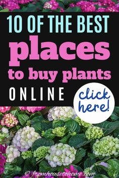 When you cant go shopping for outdoor plants in person, try having them delivered from one of these online nurseries. Whether you are looking for perennials, bushes or trees, you can find what you want from mail order nurseries. #fromhousetohome #nurseries   #plants