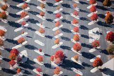 Estacionamiento con arboles