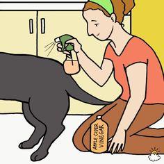 plexbax Pet owner using apple cider vinegar on dog to get rid of fleas. Fleas On Puppies, Kill Fleas On Dogs, Ticks On Dogs, Dog Flea Remedies, Home Remedies For Fleas, Apple Cider Vinegar Fleas, Flea Spray For Dogs, Flea Meds For Dogs, Pet Dogs