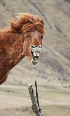 another talking horse Mr. ED except maybe this horse has found something funny to laugh out loud
