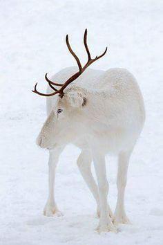 Beautiful animal - Sunil Bhatt - Google+